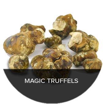 Get your Magic Truffles at Trufflemagic