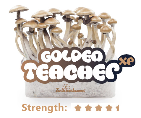 Golden Teacher Grow Kit