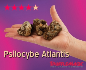 Psilocybe Atlantis Magic Truffles by Trufflemagic