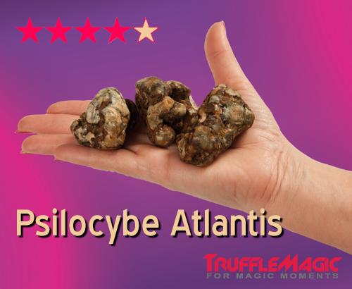 Psilocybe Atlantis Magic Truffles by Trufflemagic