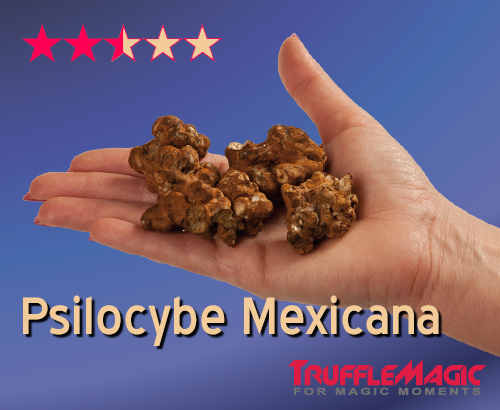 Psilocybe Mexicana Magic Truffles
