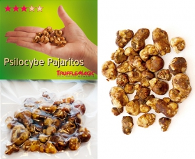Psilocybe Pajaritos Sealed Package Contents
