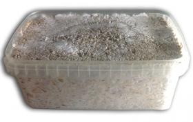 100% Mycelium Growkit