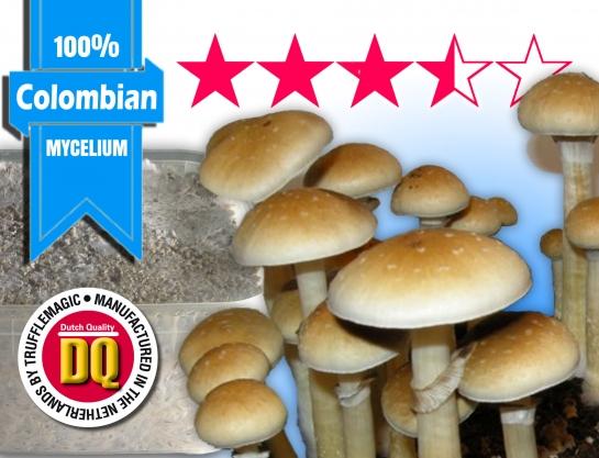 100% Mycelium Magic Mushroom Growkit COLOMBIAN