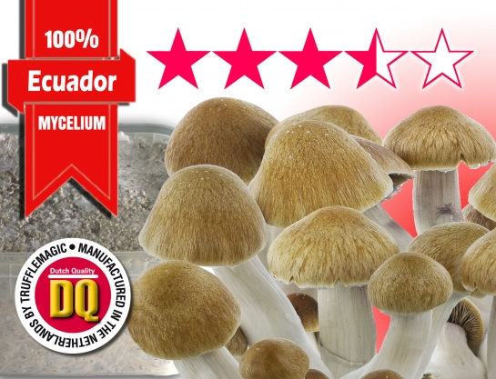 100% Mycelium Magic Mushroom Growkit Ecuador