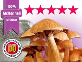 100% mycelium growkit McKennaii
