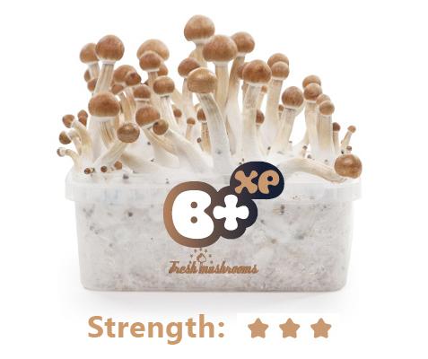 B+ Grow Kit