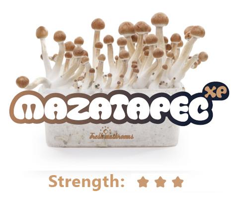 100% Mycelium Magic Mushroom Growkit Mazatapec