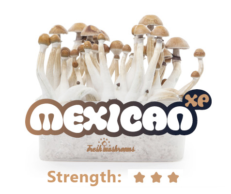 Mexican Grow Kit