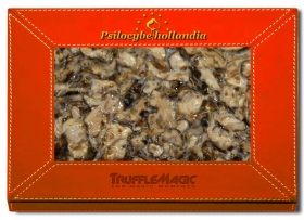 Psilocybe Hollandia 20X Deal