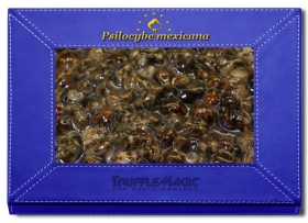 Psilocybe Mexicana 20X Deal