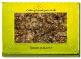 Psilocybe Tampanensis 20X Deal