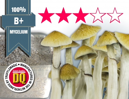 100% Mycelium Growkit Bplus