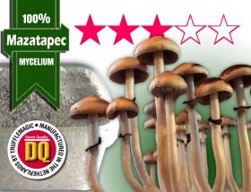 100% Mycelium Growkit Mazatapec