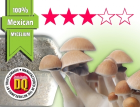 100% Mycelium Growkit Mexican