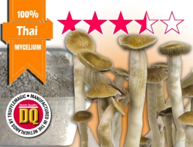 100% Mycelium Growkit Thai