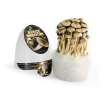 SpaceShrooms Jupiter Magic Mushrooms growkit result at Trufflemagic.com