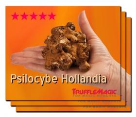 2+1 Free Psilocybe Hollandia