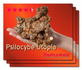 2+1 Free Psilocybe Utopia