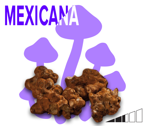 magic mushroom truffles mexicana