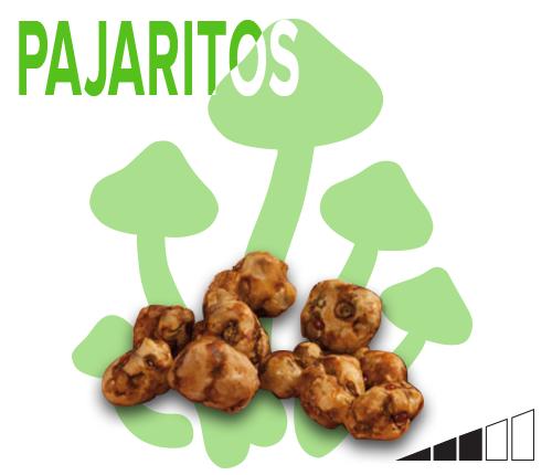 magic mushroom truffles parajitos