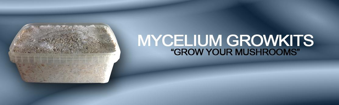 banner_Mycelium_versie3