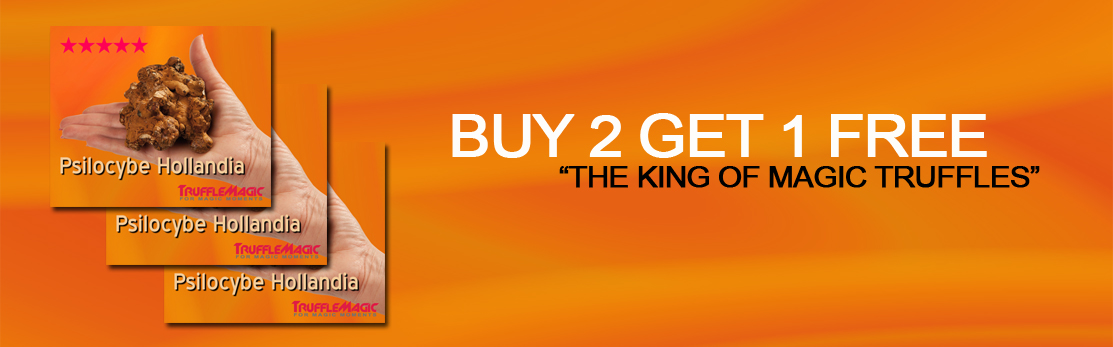 Hollandia - Buy 2 Get 3!