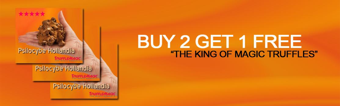 Hollandia - Buy 2 Get 3!