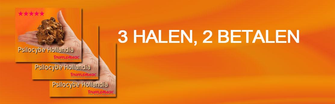 banner-hollandia-3-voor-2