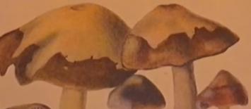 powell documentary magic truffles mushrooms trufflemagic