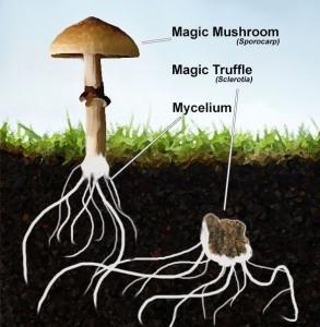 Magic truffels wat zijn dat?