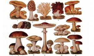 Different types of magic mushrooms