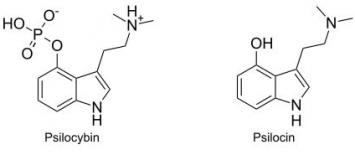 Psilocybin and psilocin effects