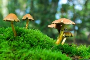 Searching for magic mushrooms