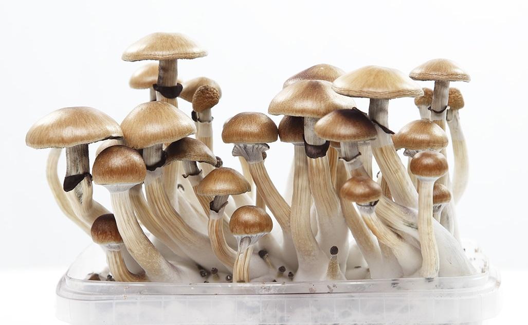 What are magic mushrooms