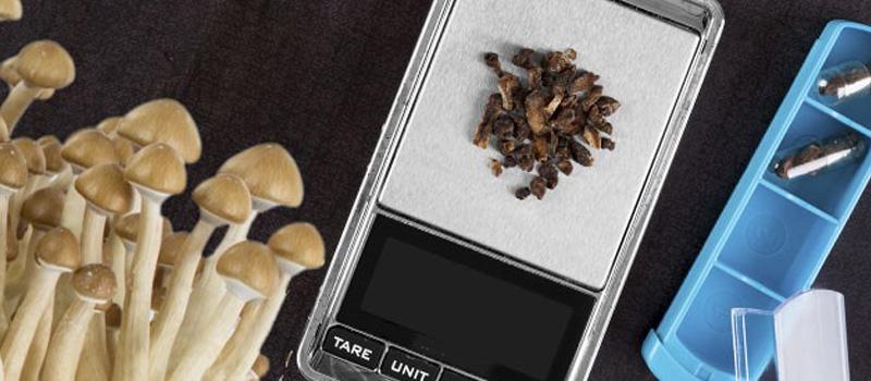 Ultimate Guide to Microdosing Magic Shrooms