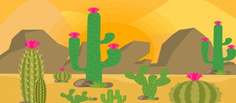 Different Mescaline Cacti