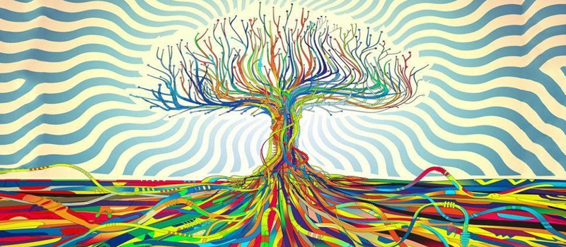 Different Natural Psychedelics