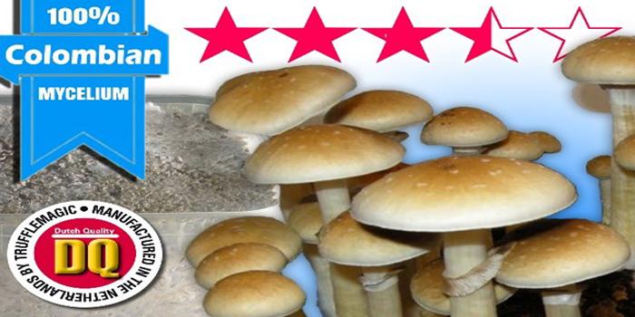 How do magic mushrooms kits work