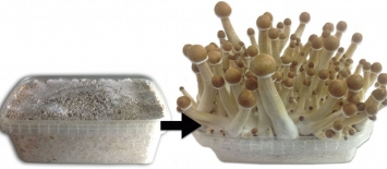 How to Pick Shrooms