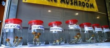 How to Store Magic Mushrooms