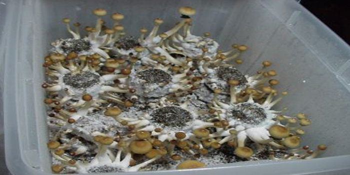 Step 9. Setting Up a Fruiting Chamber for Shrooms